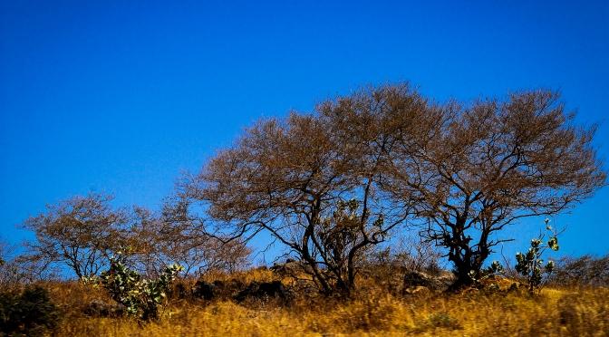 Photoblog: The bushes of God's revelation, Dhofar Oman
